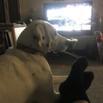 Pablo loves watching TV