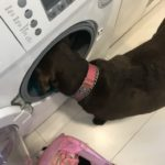 Helping with the laundry