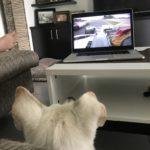 Eddie & Clark watching Formula One