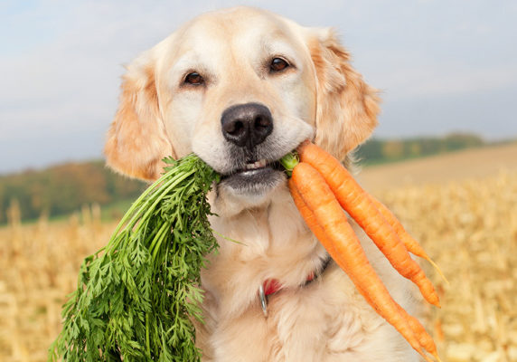 are-carrots-good-for-dogs-1